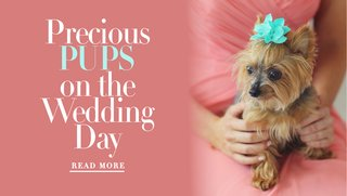 including-your-dog-during-your-wedding-ceremony-and-wedding-day