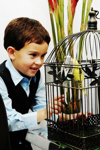 little-boy-plays-with-parakeet-birds-in-bird-cage