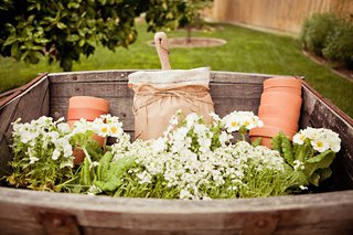 white-flowers-and-terra-cotta-pots