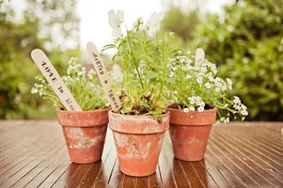 guests-potted-plants-in-terra-cotta-pots