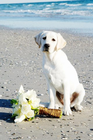 beach-wedding-white-rose-and-calla-lily-bouquet