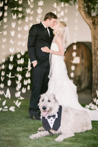 bride-in-a-strapless-hayley-paige-dress-and-veil-kisses-groom-dog-in-a-tuxedo-bib-sits-nearby