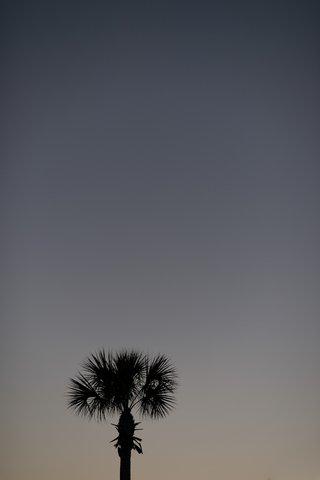 sea-island-georgia-palm-tree-and-sunset