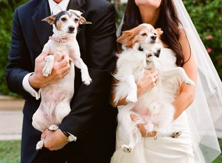 bride-and-groom-carry-their-dogs