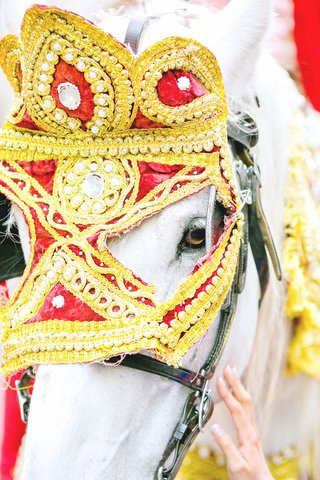 horse-decorated-for-indian-grand-entrance-baraat