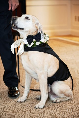 dog-as-ring-bearer-dog-with-bow-tie-in-tuxedo-outfit-for-wedding
