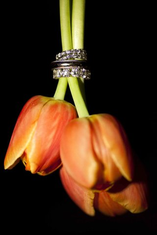 eternity-bands-on-orange-tulip-stems
