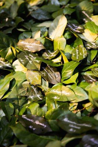 escort-card-calligraphy-on-fresh-green-leaf