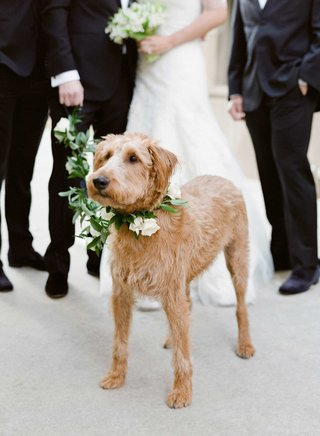 couples-dog-with-flower-and-leaf-collar-and-leash-on-wedding-day