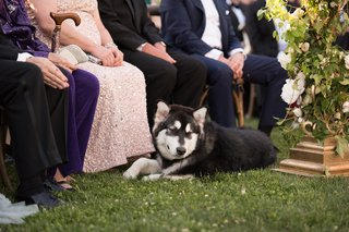 bride-and-grooms-husky-watches-wedding-ceremony