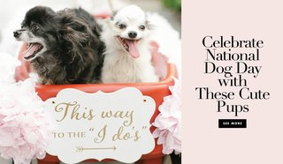 celebrate-national-dog-day-with-these-cute-pups-at-their-parents-weddings