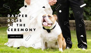 how-to-have-your-dog-in-the-wedding