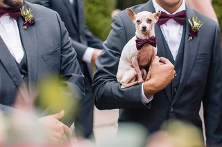 chihuahua-dog-in-purple-bow-tie-held-by-a-groomsmen-in-a-gray-tuxedo-acted-as-the-ring-bearer