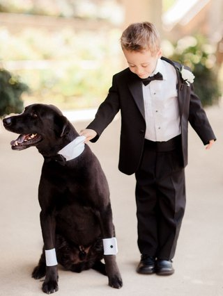 ring-bearer-in-tuxedo-holding-dog-lab-with-cuffs-and-collar-suit-bow-tie