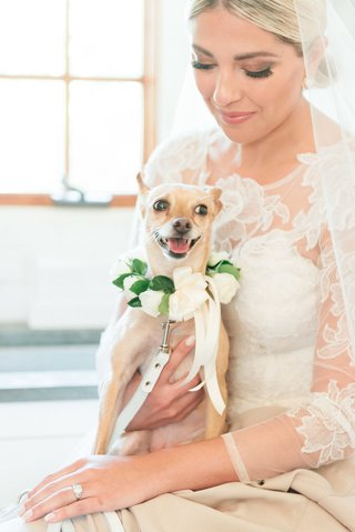 lap-dog-with-floral-collar-sitting-on-the-lap-of-the-bride