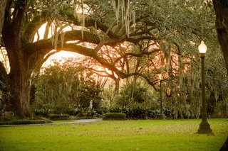 southern-wedding-location-under-large-tree-and-lamp