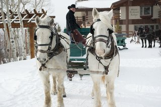 white-clydesdale-horses-pulling-green-carriage