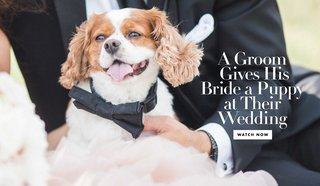 wedding-gift-from-groom-to-bride-a-surprise-puppy-at-the-reception-watch-wedding-video-with-surprise